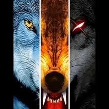 kingdom_wolf